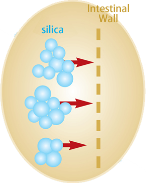 Resorption of Silica